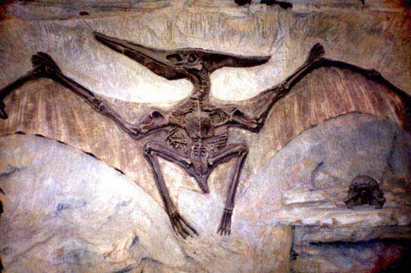 Всё о динозаврах – Птеродактиль